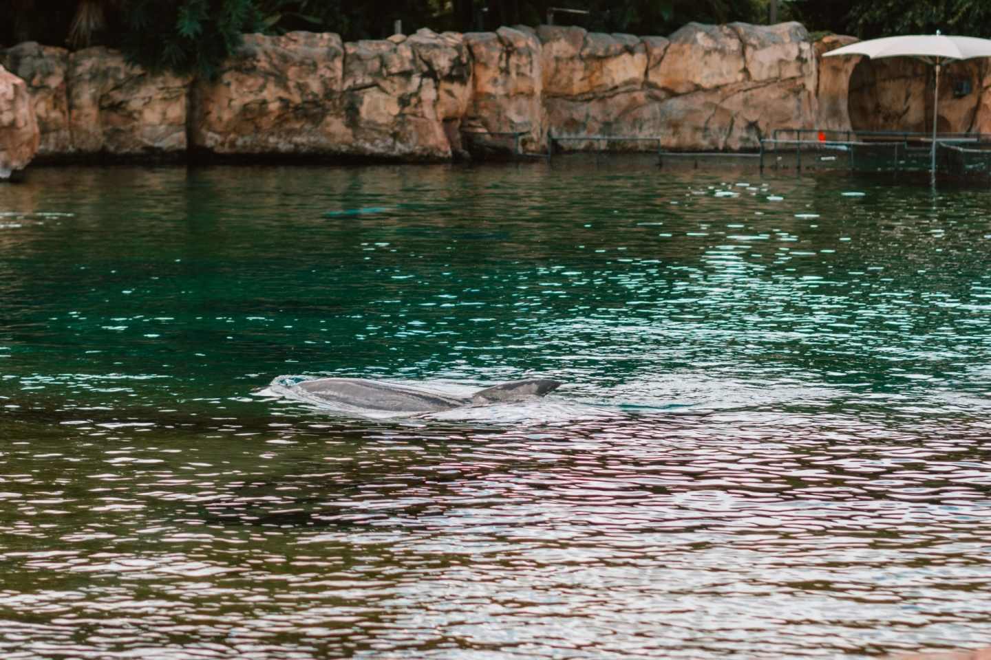 Dolphin at Discovery Cove