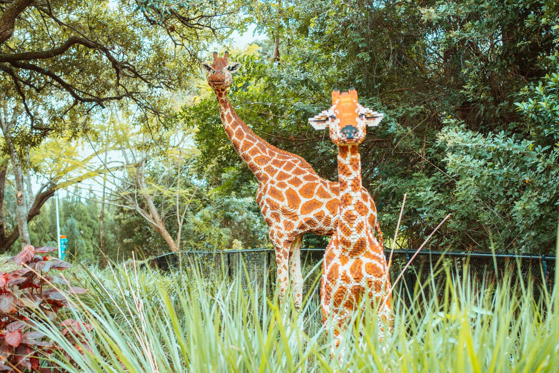 Legoland Safari Review