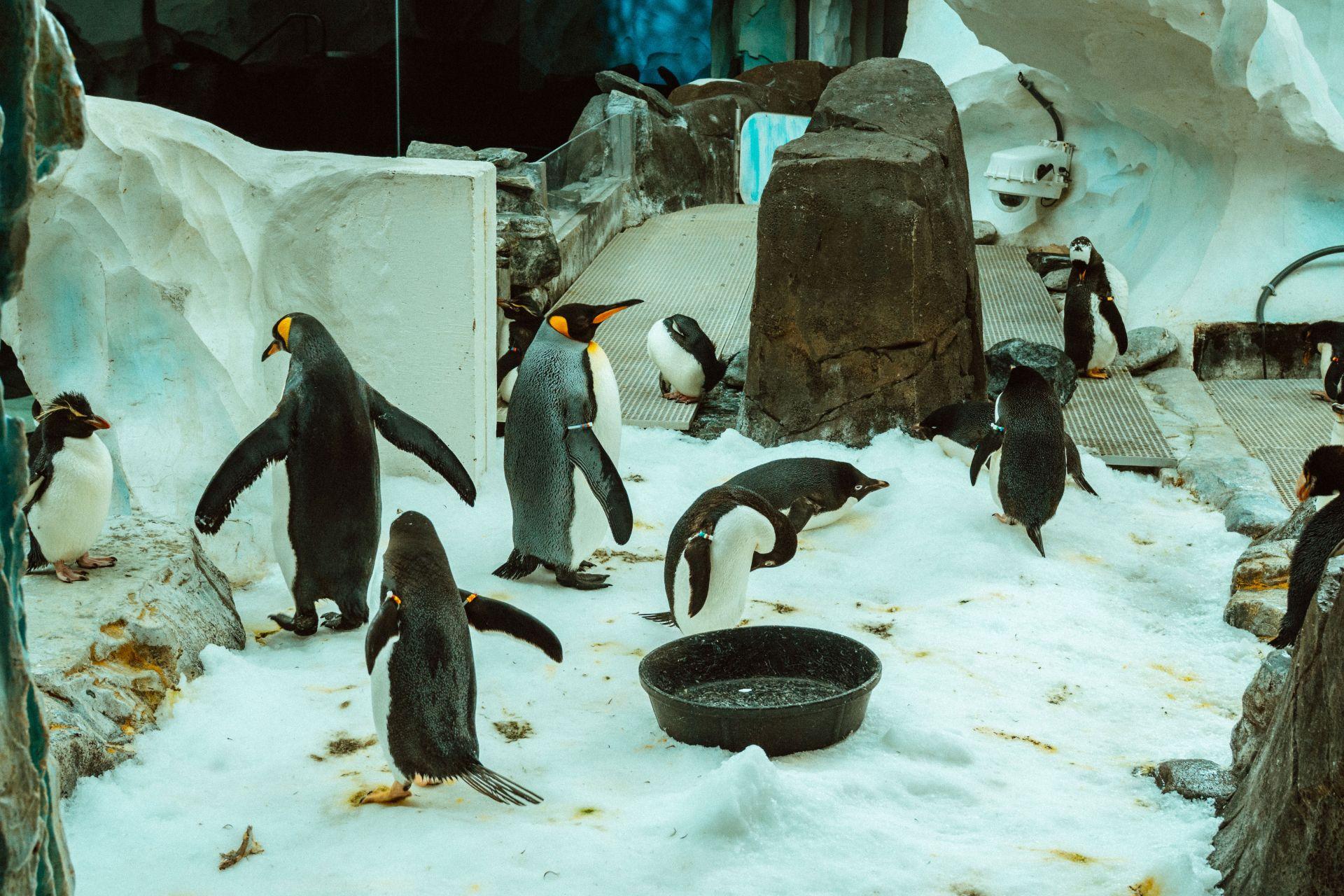 SeaWorld Penguin Encounter Review