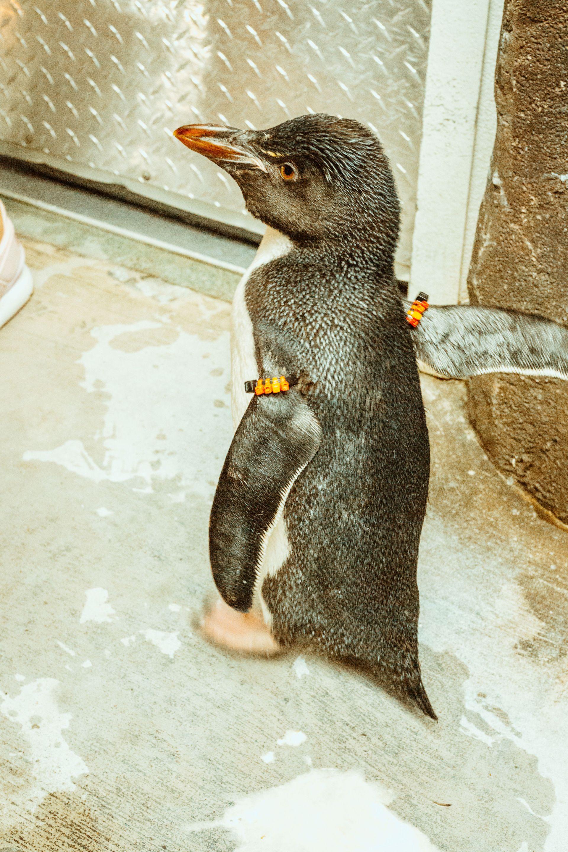 SeaWorld Penguins