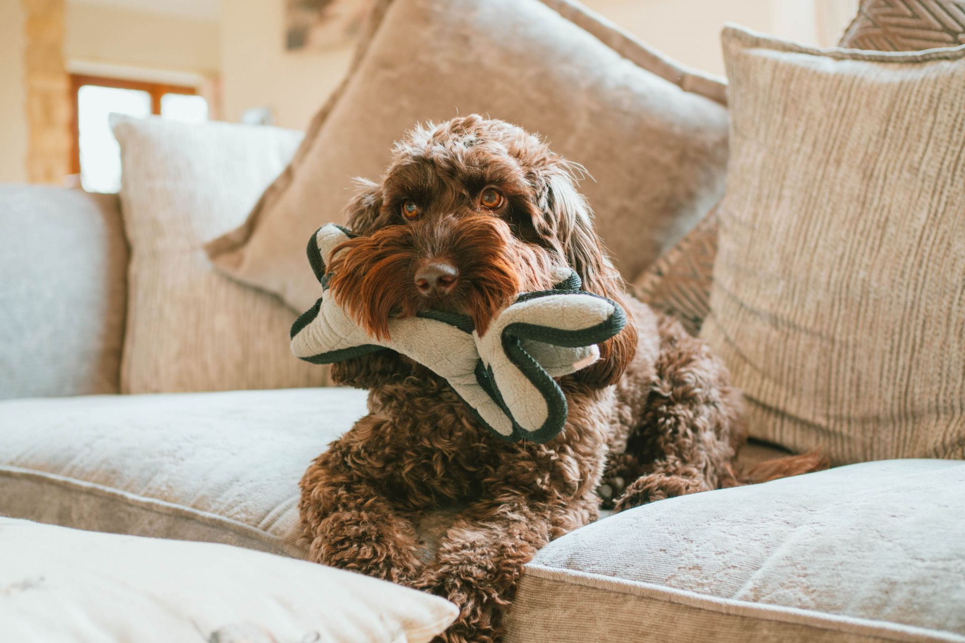 Pet Insurance by Petplan